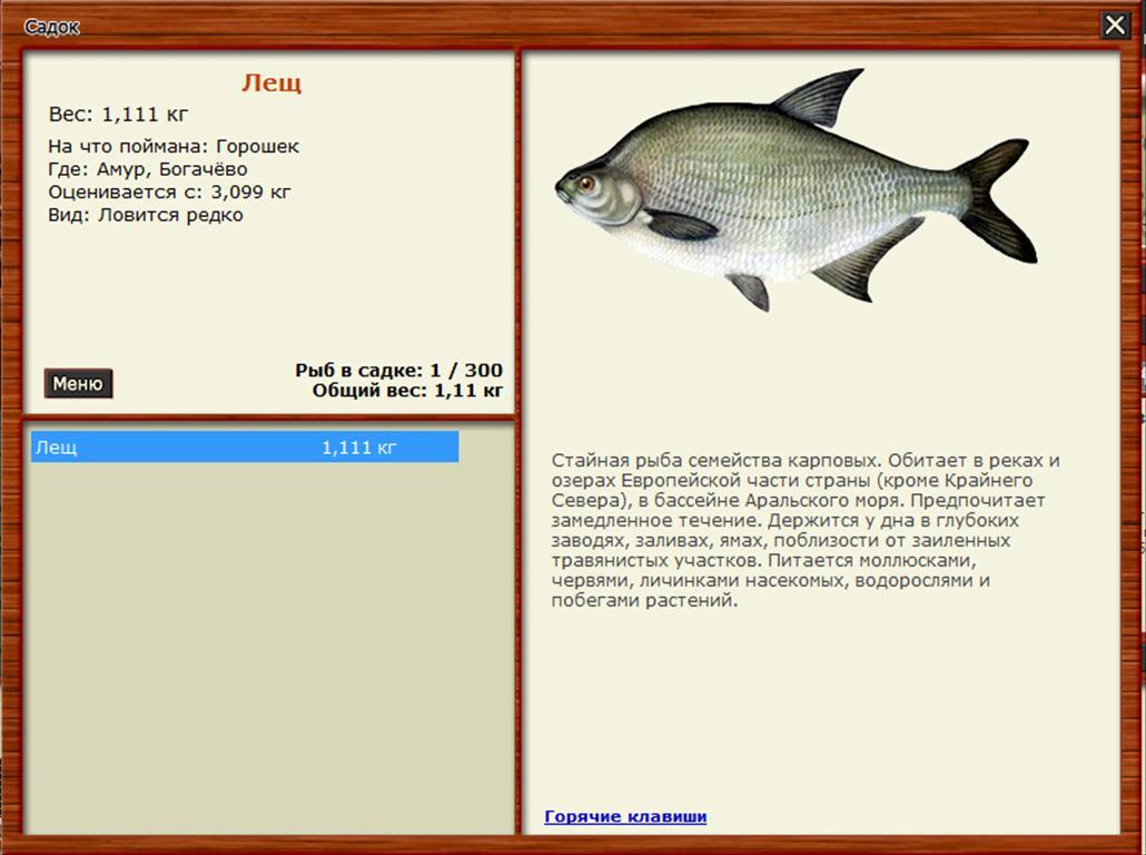 прикормка рыбалки фидер